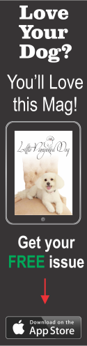 Little Pampered Dog Magazine - Available on the App Store